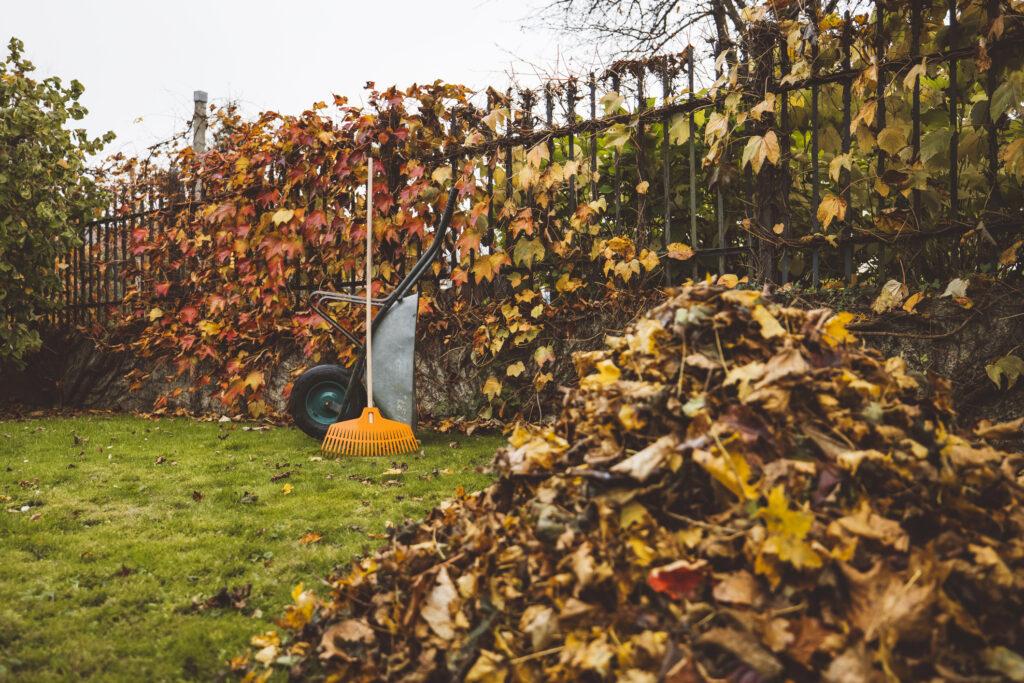 feuille d'automne avec brouette et rateau
